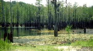 Ocheesee Pond