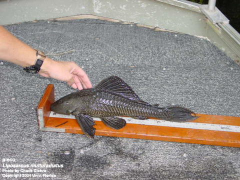 Freshwater Fish Plant Management In Florida Waters