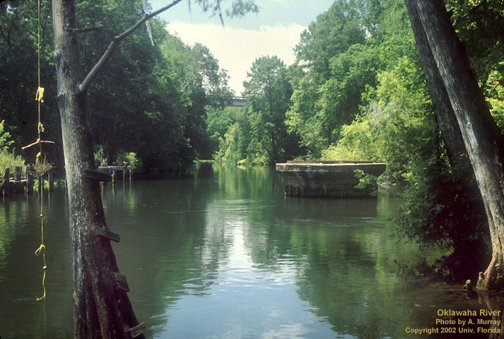 The Ocklawaha River is one of approximately 1,400 rivers and streams that cross Florida.