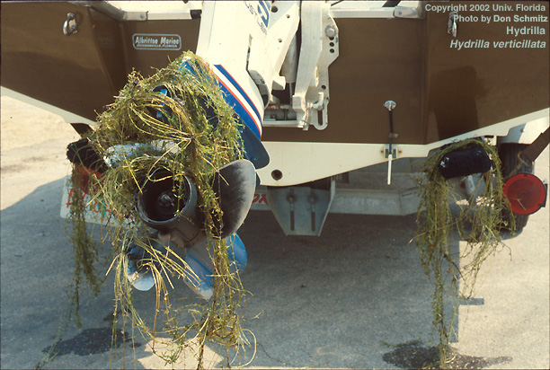 Cleaning your propeller and trailer before and after boating is essential to protect Florida waters from invasive weeds.